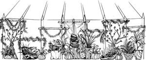 Kuahu sketch drawing